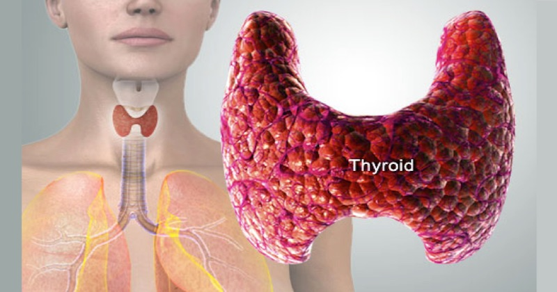 Thyrolin for thyroid