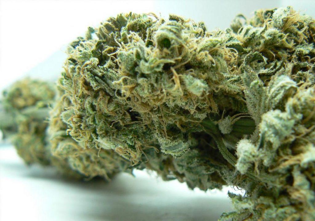 Oregon cannabis delivery